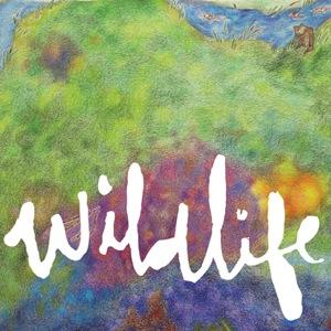 Wildlife by Headlights